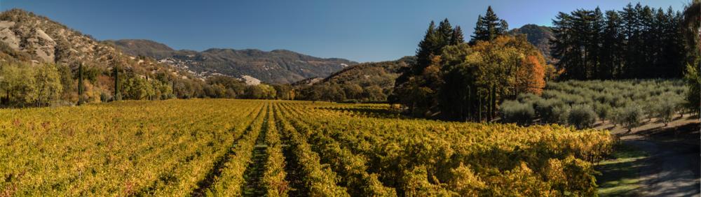 Bonterra's vineyards in Mendocino County, California.