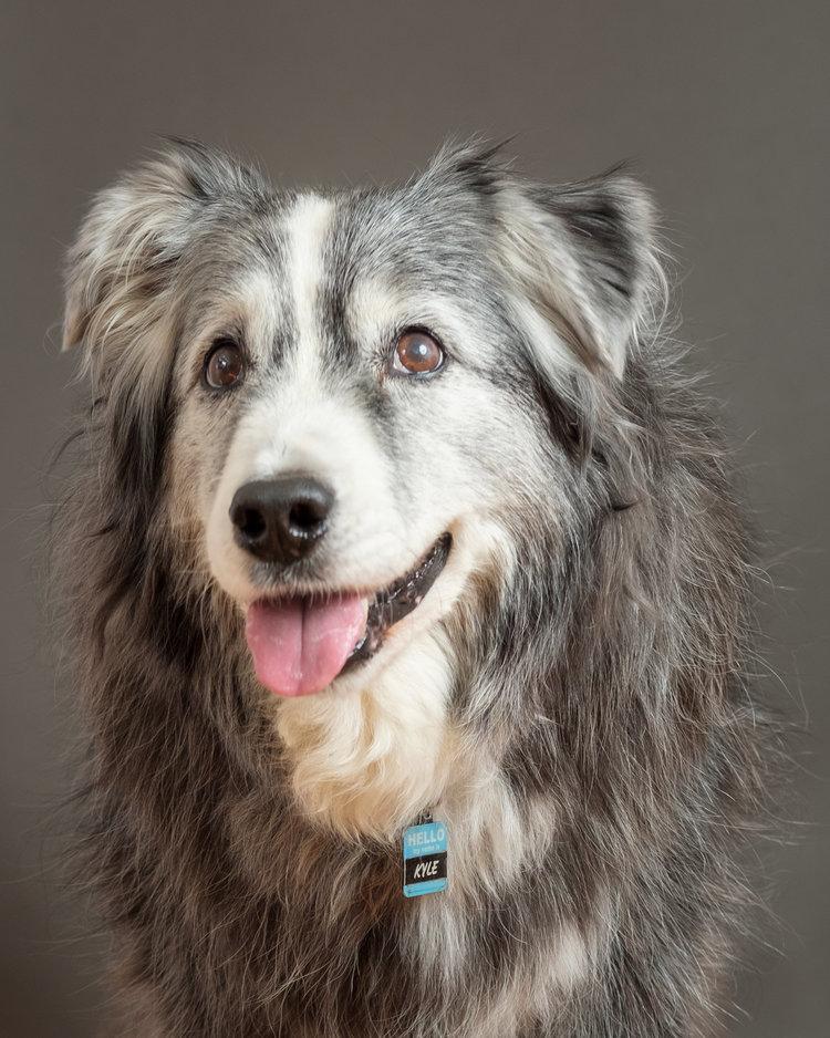 Blog — LOVEDOG + CO | Carmel Dog Photographer