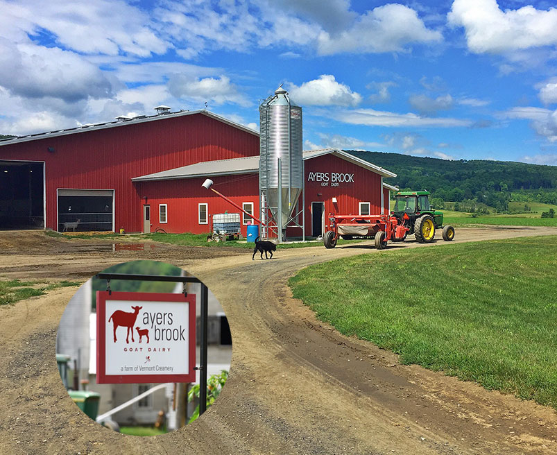 Ayers Brook Farm - Vermont Creamery, in partnership with Evergreen Conservation Partners, collaborated to establish a model commercial goat dairy on the farm to serve as a catalyst for fostering the growth of the goat dairy industry in Vermont.
