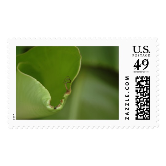 delicate_new_growth_banana_leaf_photo_detail_v16_postage-stamp-design-and-photography-by-melody-watson.jpg