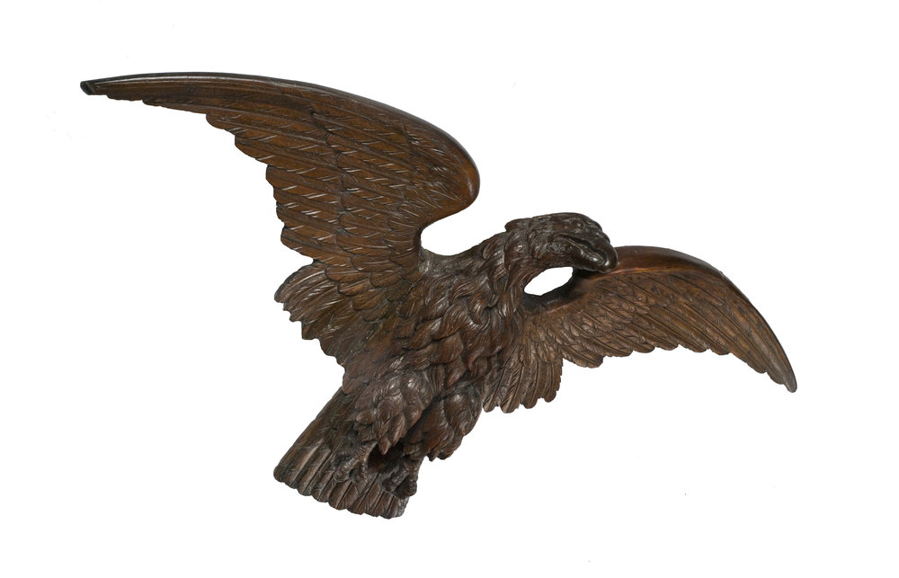 Young Eagle 4.jpg