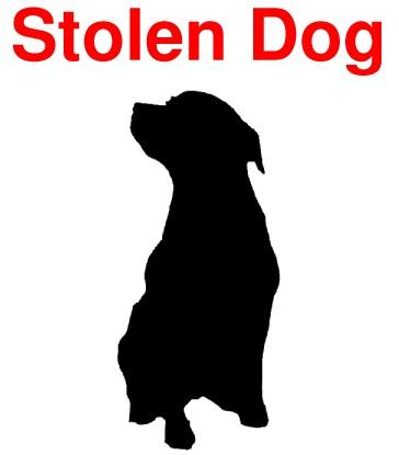 stolen-dog.jpg