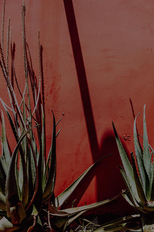 BORDER FREE TRAVELSx SALT & WINDPRESENTMEXICO~OAXACA CITY -