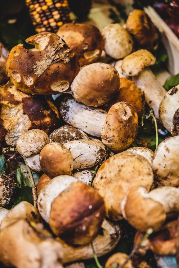 Porcini Mushrooms Italy.jpg