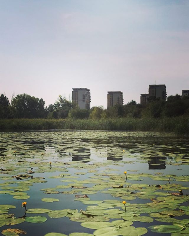 #summer in the city #warsaw #nature