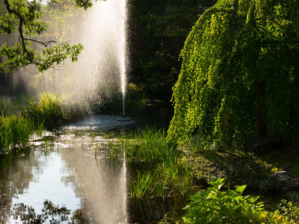 Bo's pond, Highfalls NY