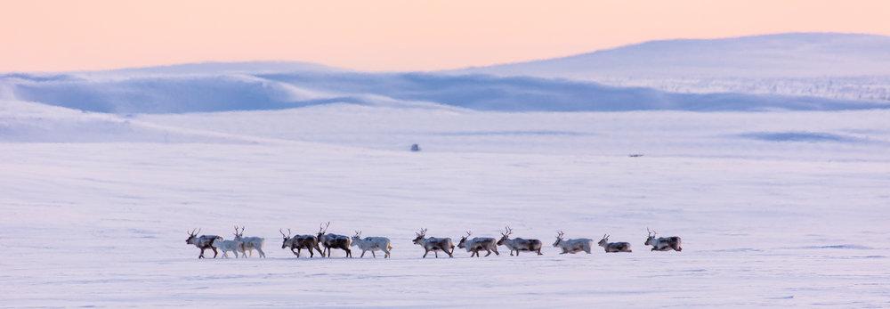 arctic_desert-89.jpg