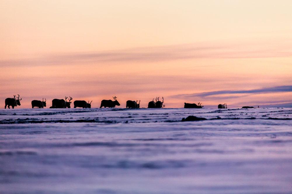 reindeer_sunset_silhouette.jpg