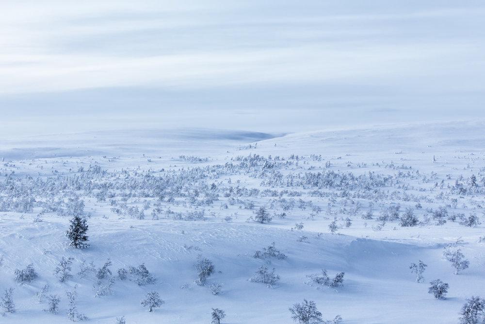 blue_moment_arctic_lapland.jpg