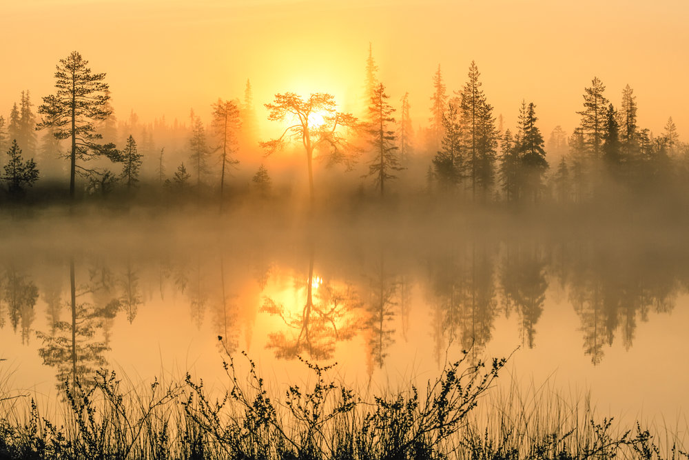 lapland_summer_fog-8.jpg