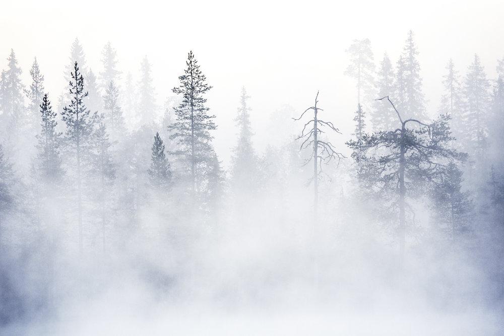 lapland_summer_fog-10.jpg
