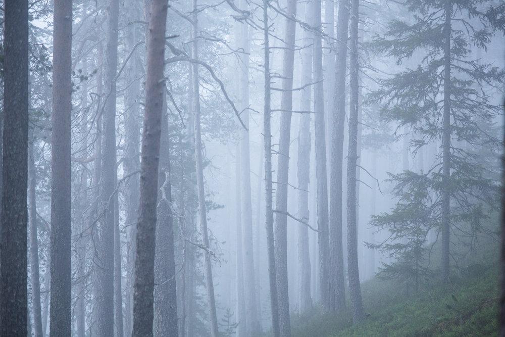 lapland_summer_fog-13.jpg