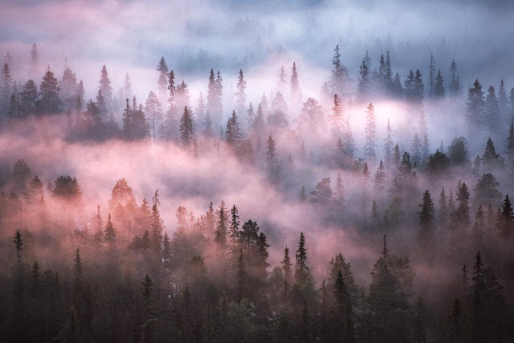 lapland_summer_fog-14.jpg