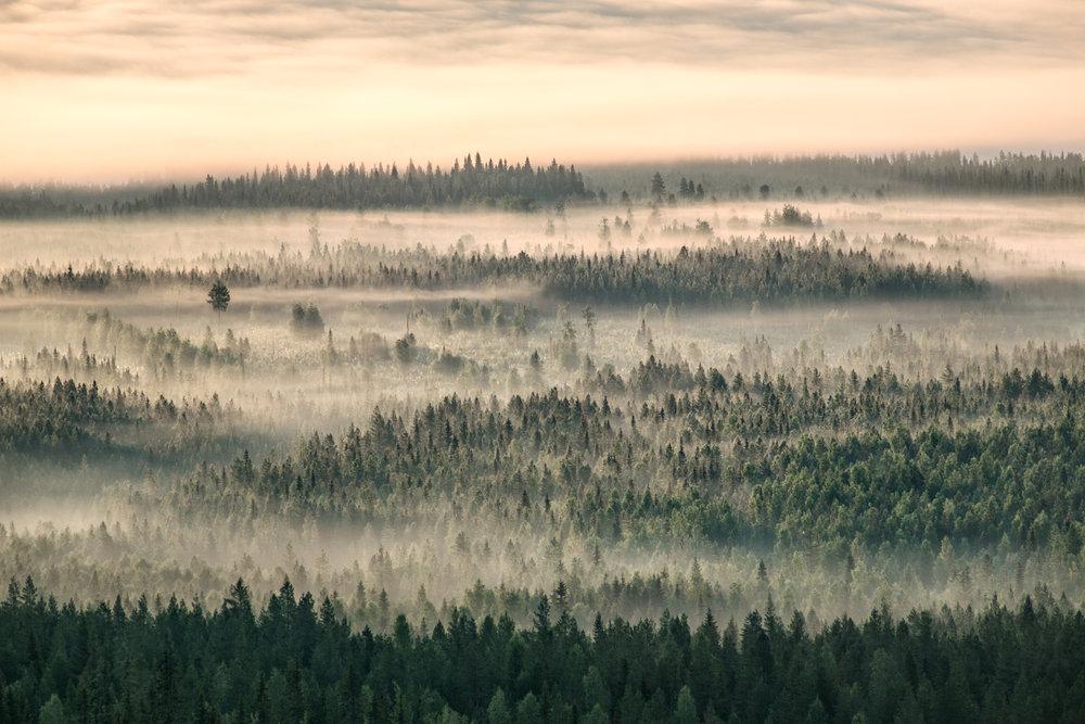 lapland_summer_fog-15.jpg