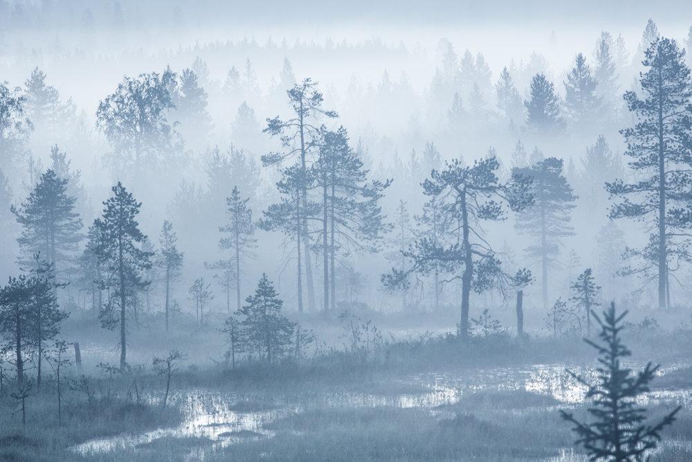 lapland_summer_fog-18.jpg