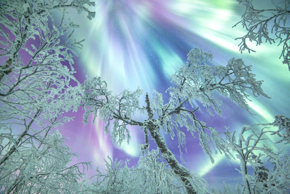 northern_lights_lapland_winter-52-3.jpg