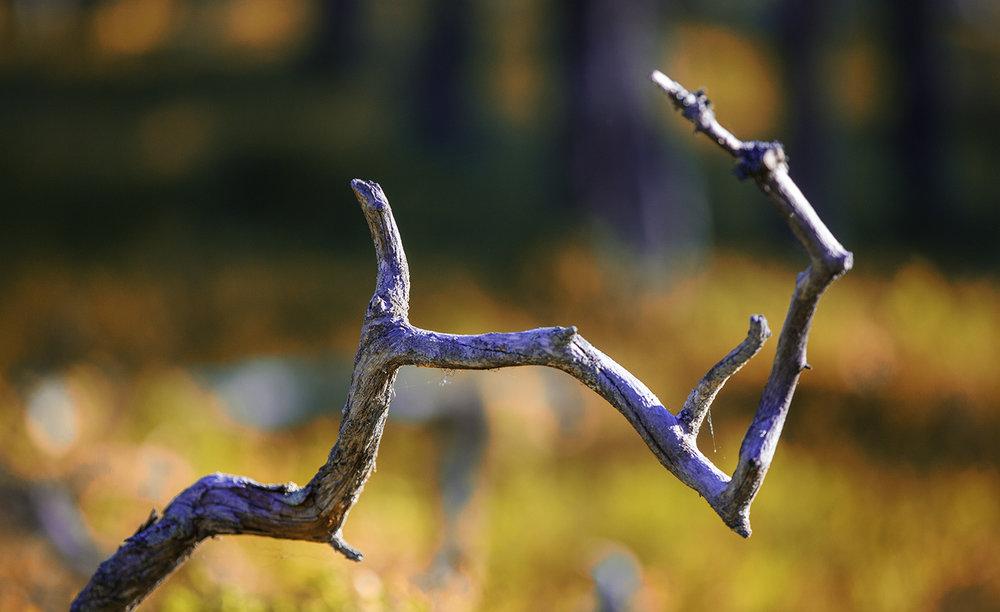 autumn_colours_photography.jpg