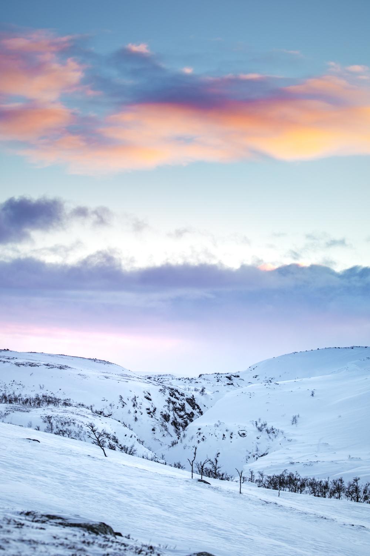 reindeers_lapland-2.jpg