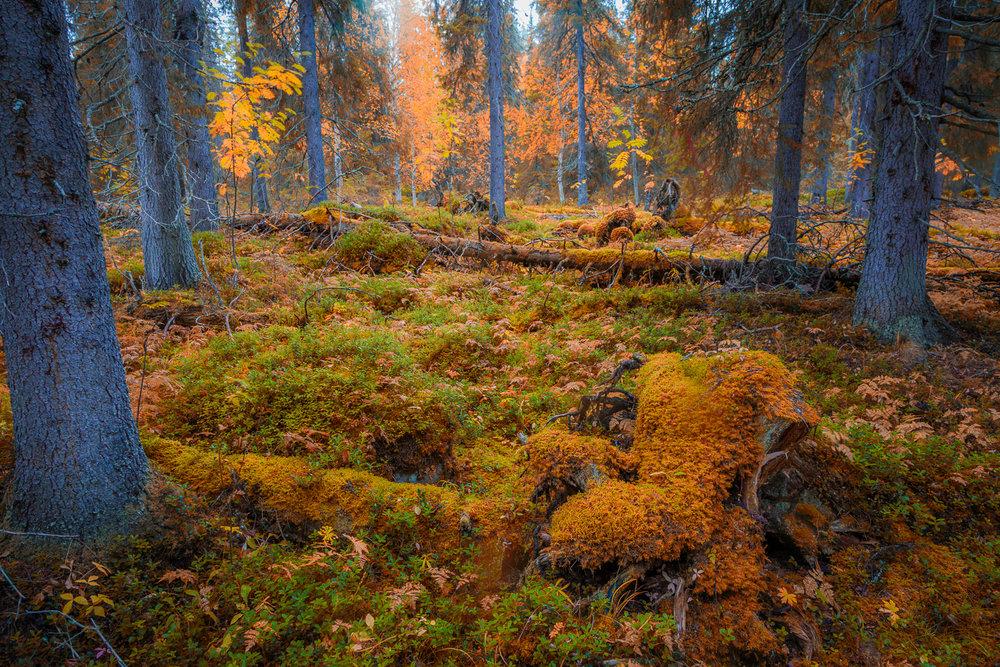 autumn_muonio-11-Edit.jpg