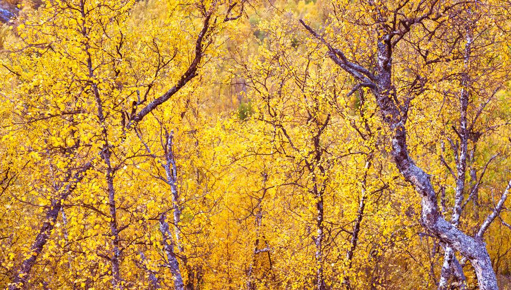 autumn_muonio-12-Edit.jpg