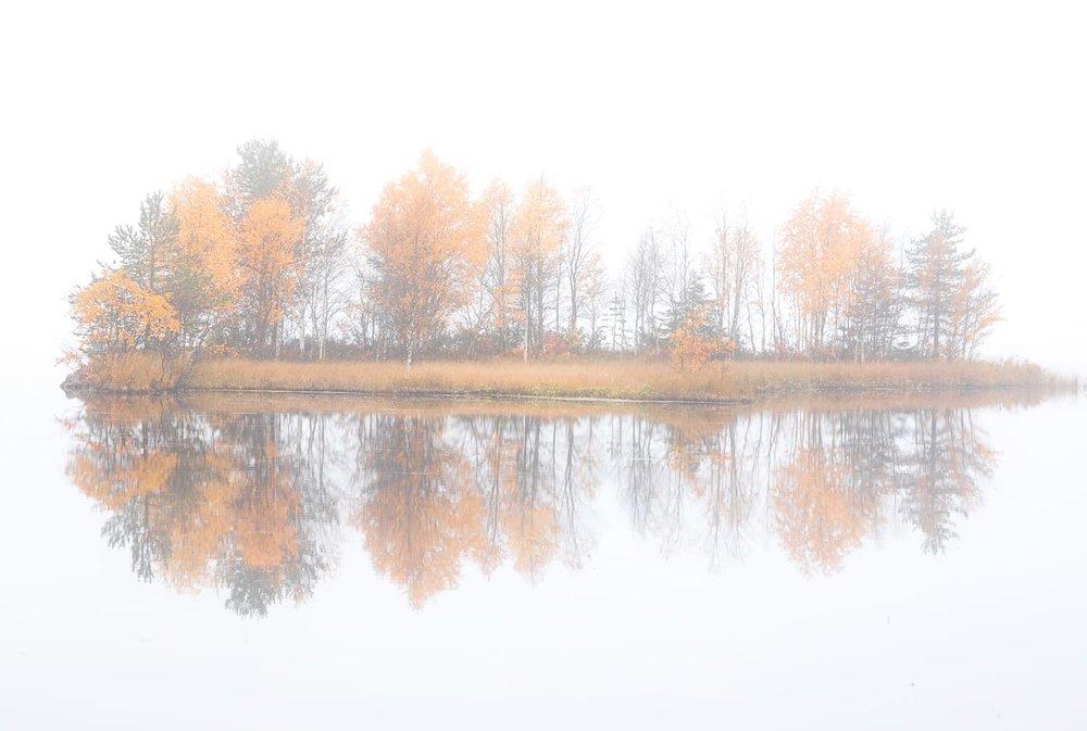 trees_tundra_expedition.jpg