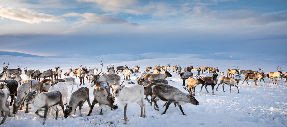 reindeer_culture_local_view.jpg