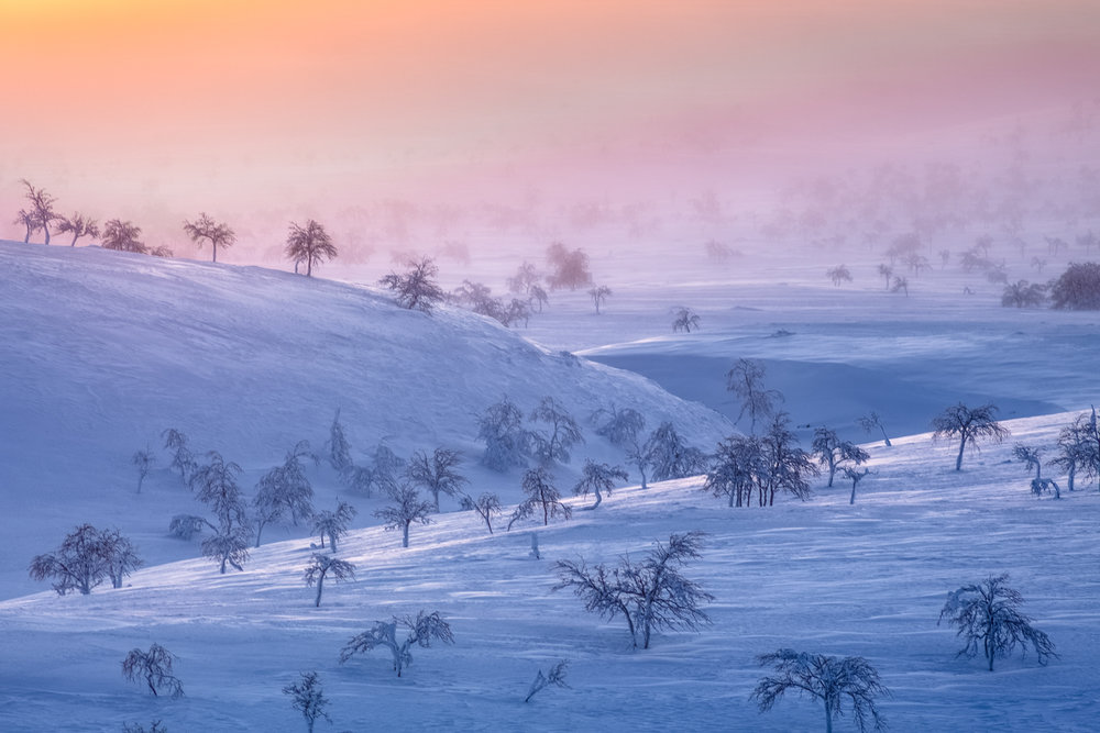 nordic_forest_arctic_photoshoot.jpg