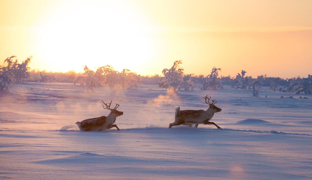 wanderer_explore_focus_arctic.jpg