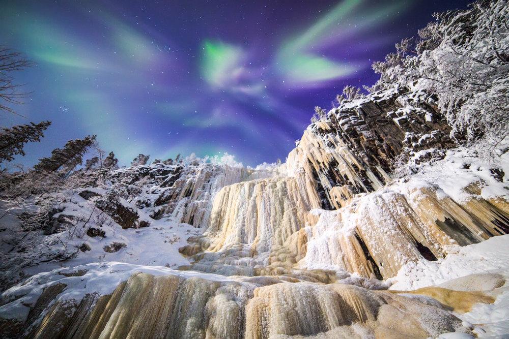 northern_lights_magic_forest.jpg