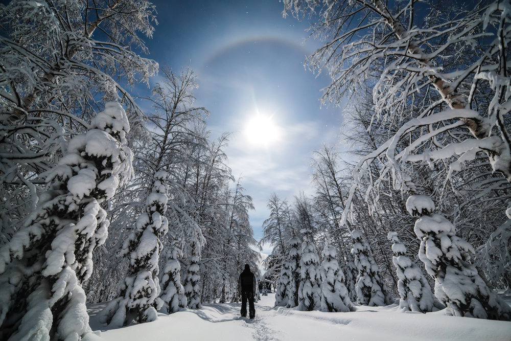 winter_forest_caption_photography.jpg