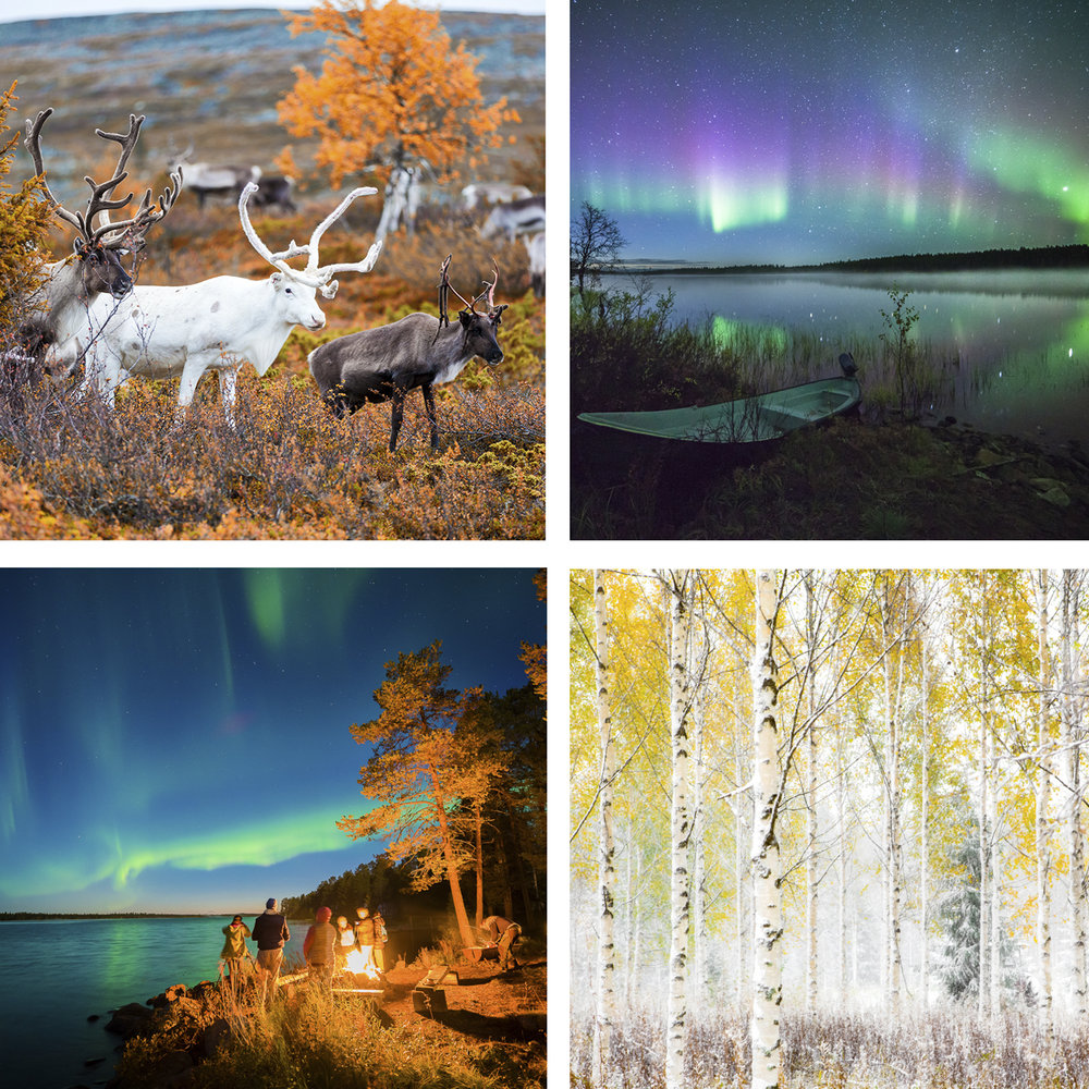 AUTUMN PHOTO WORKSHOP-COLOURS OF LAPLAND - Sep 1st - Sep 8th 2019From boreal forests to tundra fells and coastal wonders of Norway. Photography workshop tours across the northernmost parts of Scandinavia!