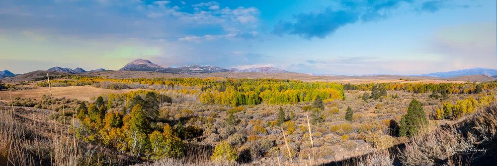 Dogtown Panorama-.jpg