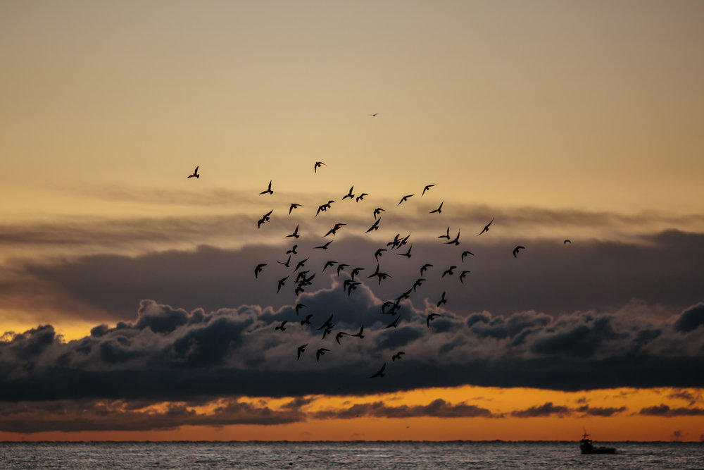 Seagulls Over The North Sea