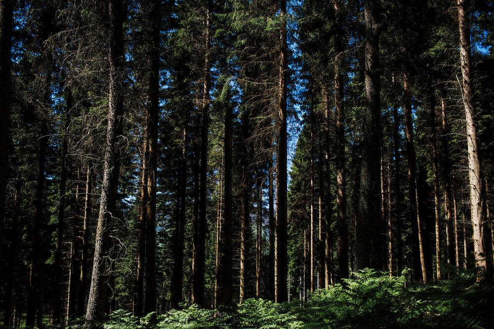 Perthshire Trees