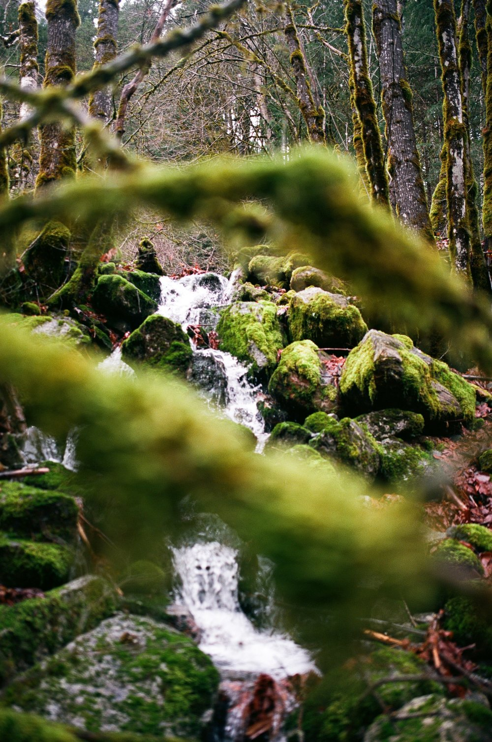 North Cascades National Park, Ektar 100