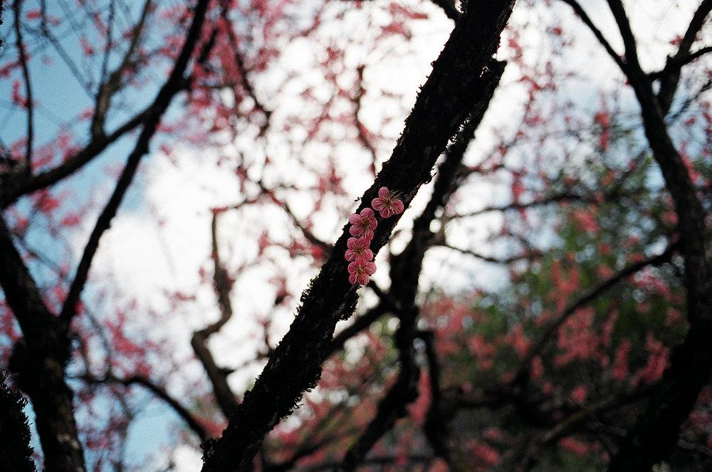 Portland, OR -Fuji Natura 1600