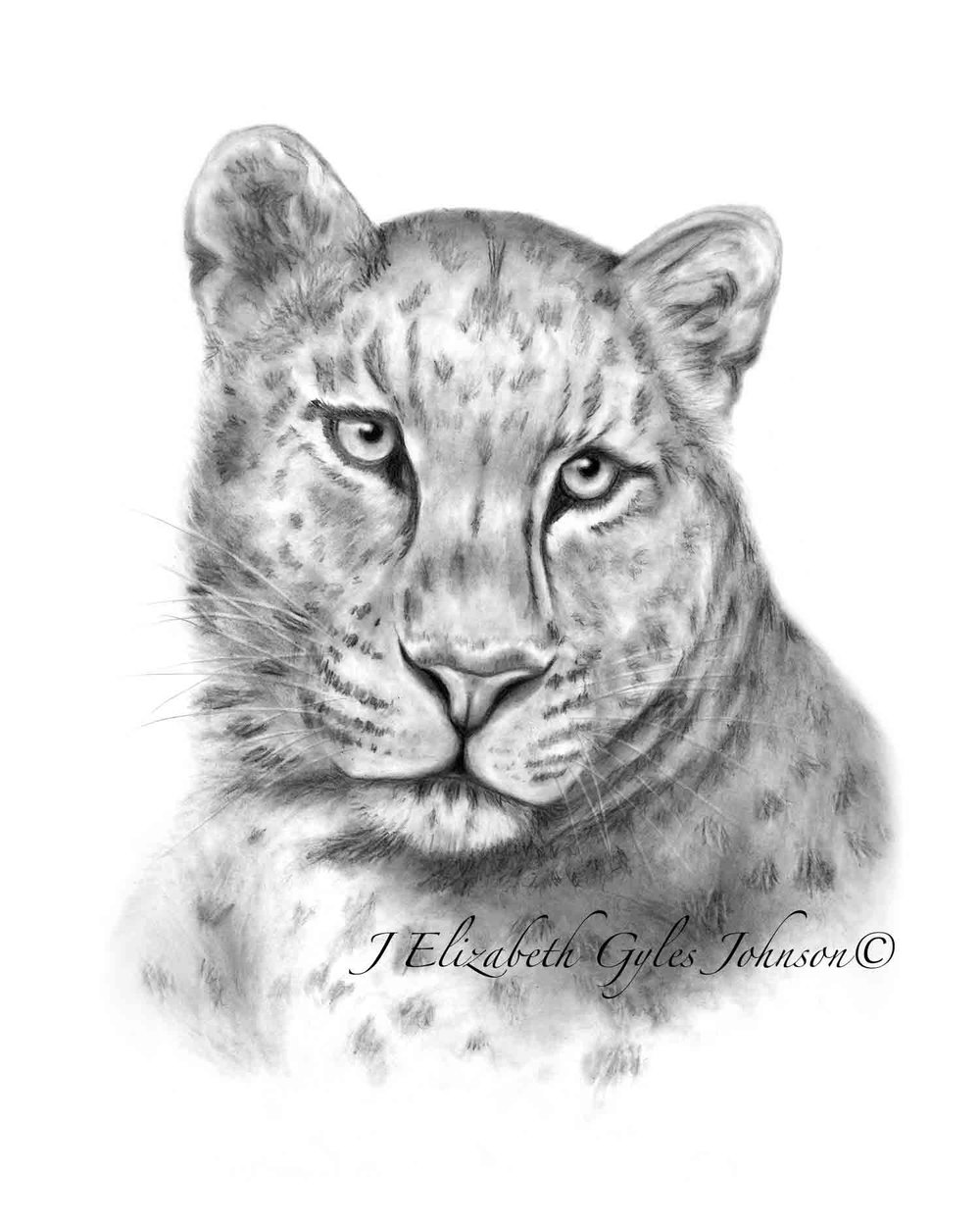 Leopard in Pencil