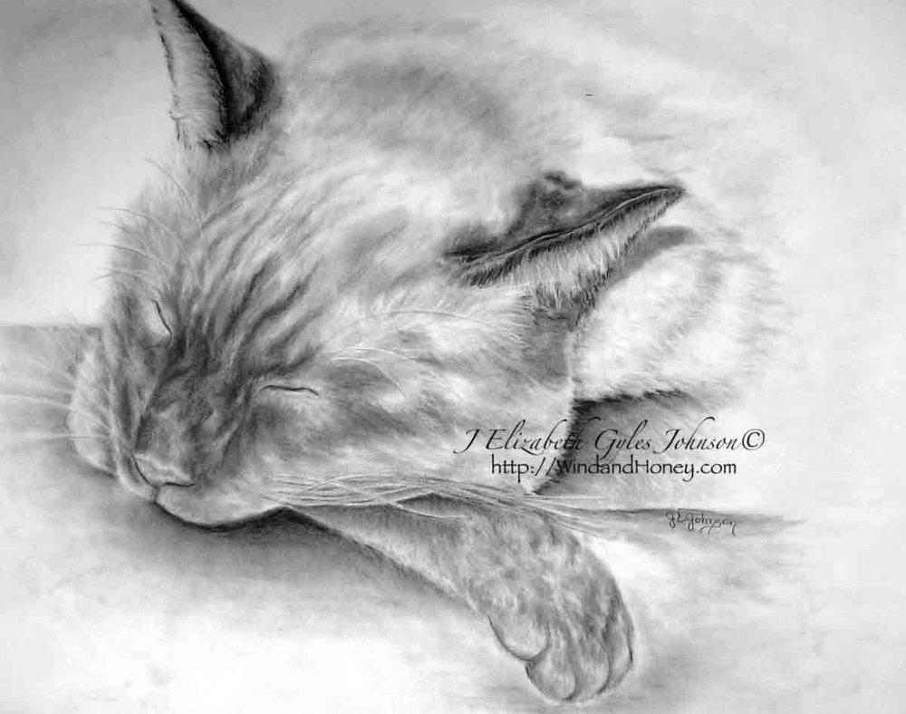 Sleeping Siamese