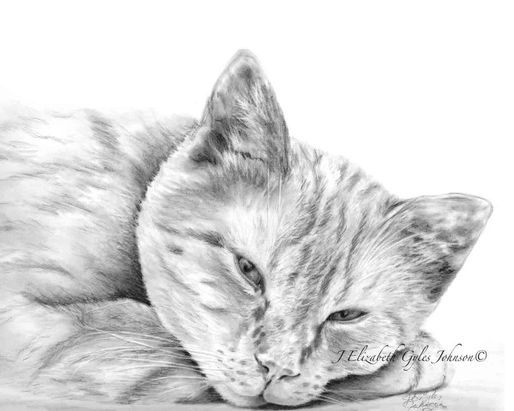 Sleepy Tabby