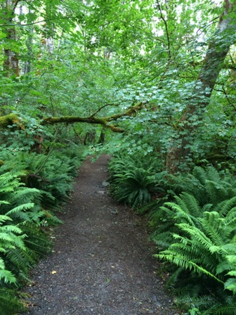 Walking Trail at North Cascade Institute, Washington State