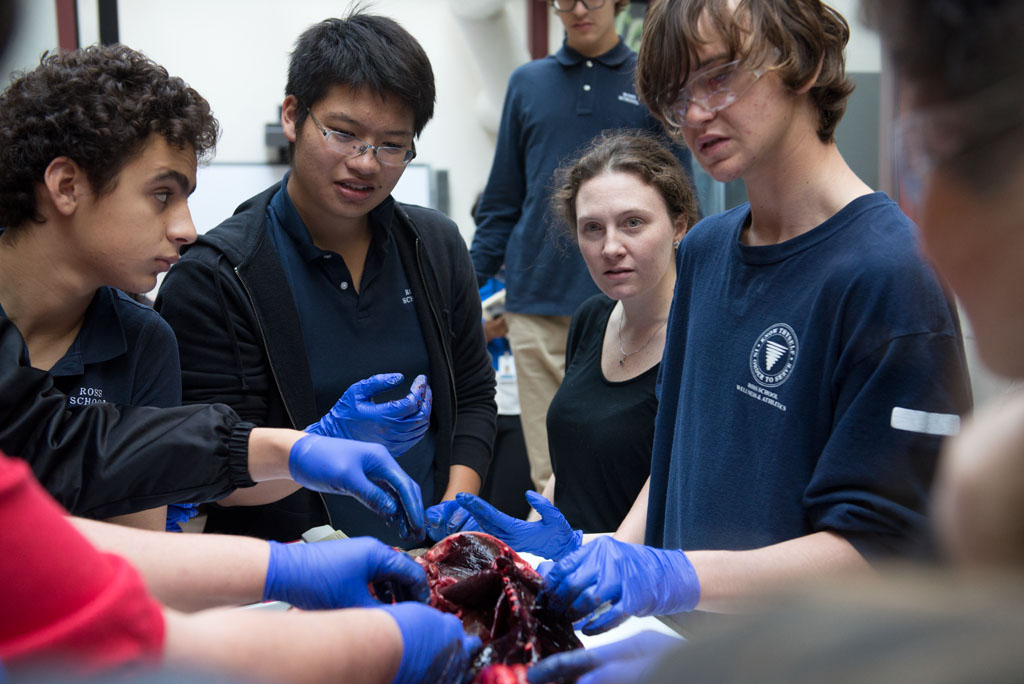 seal_dissection_16_9187