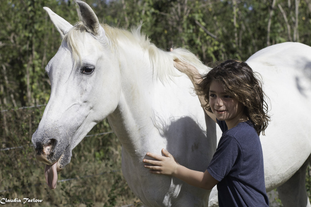 Horses-214-1-of-1.jpg