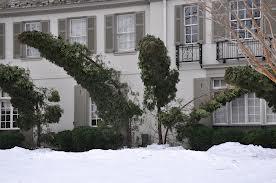 Arborvitae snow damage