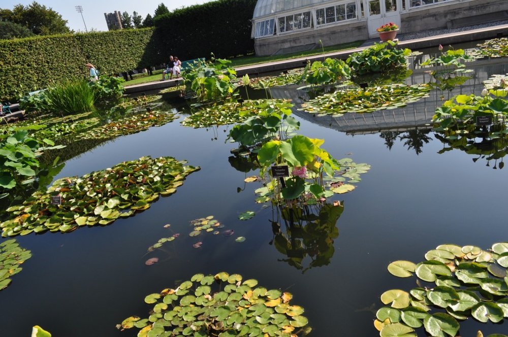 Waterlily Pond2.jpg