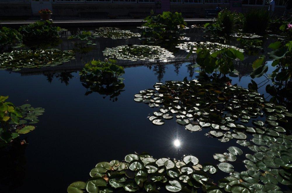 Waterlily Pond3.jpg