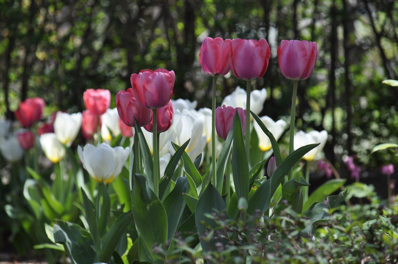 Spring Bulbs Blossoming Beginnings