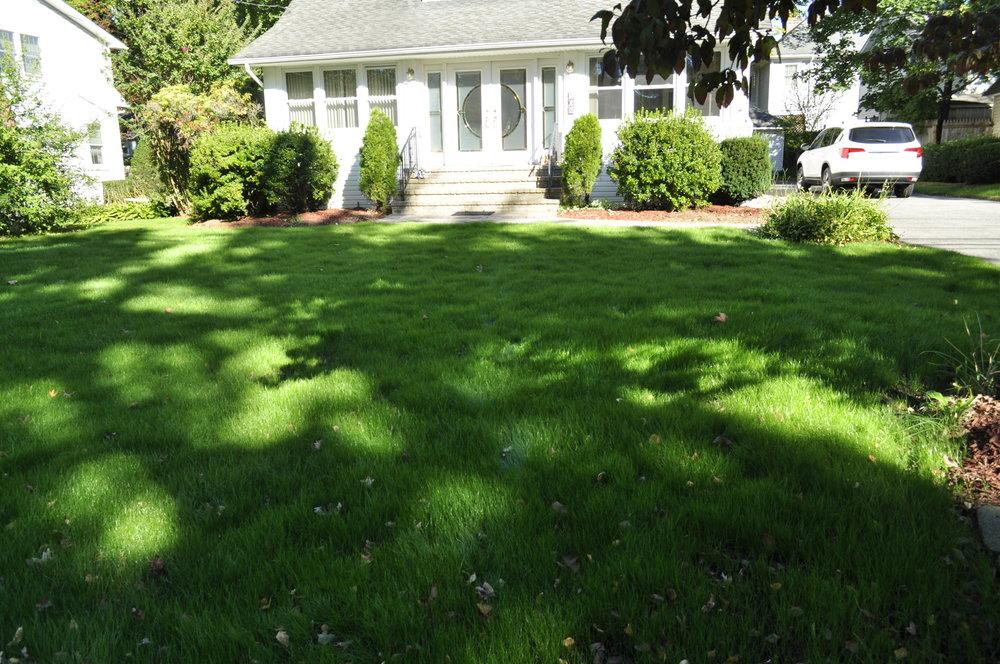 Lawn Repair by Blossoming Beginnings