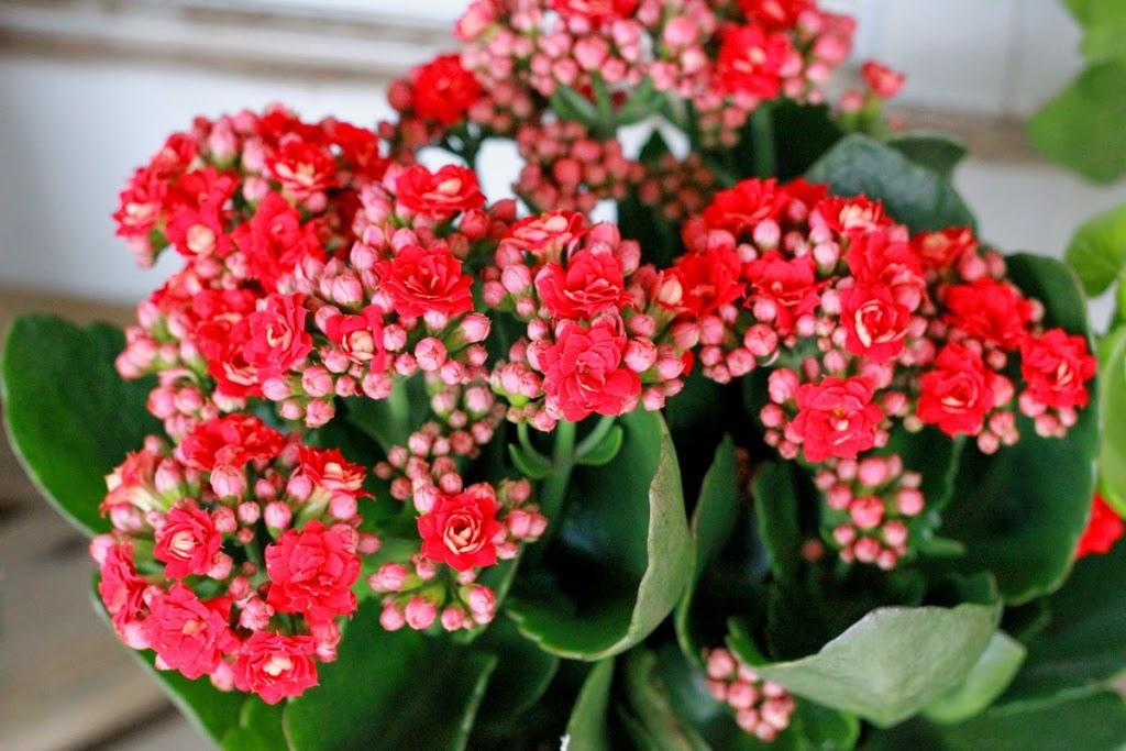 Flowerpot DIY
