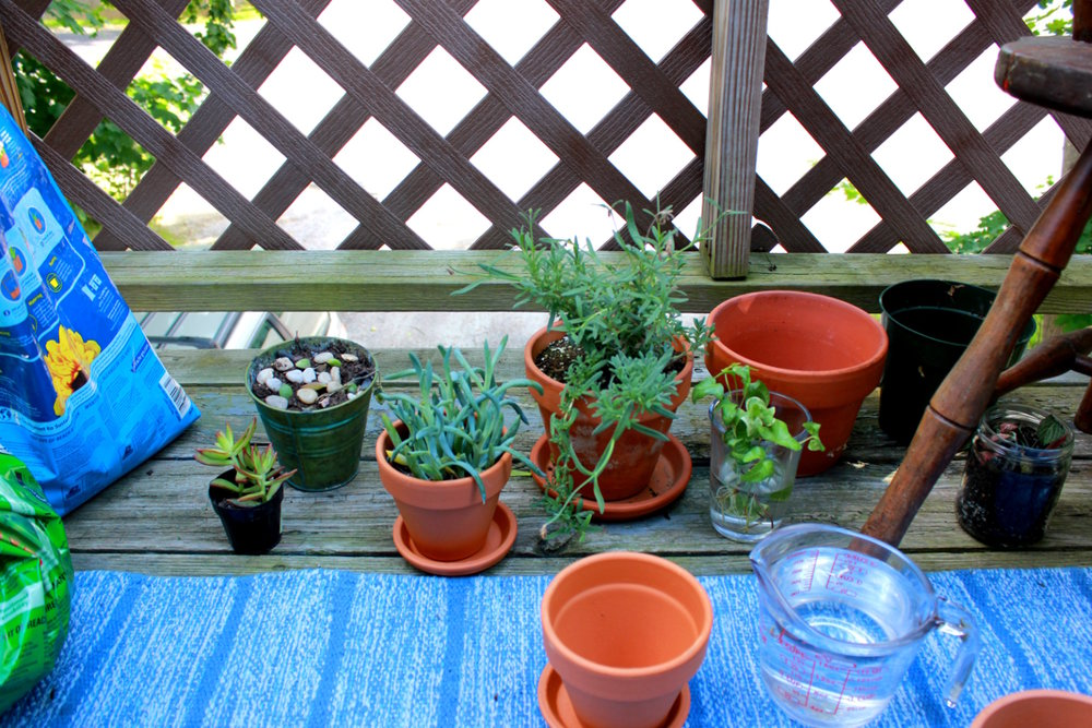 Plants in Pots on the Deck
