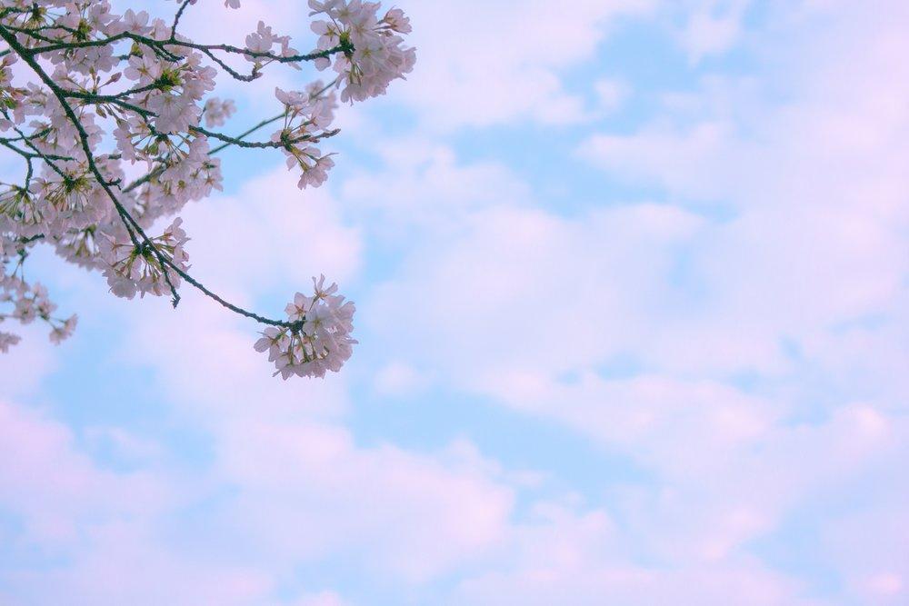 bloom-blossom-blue-sky-356267.jpg